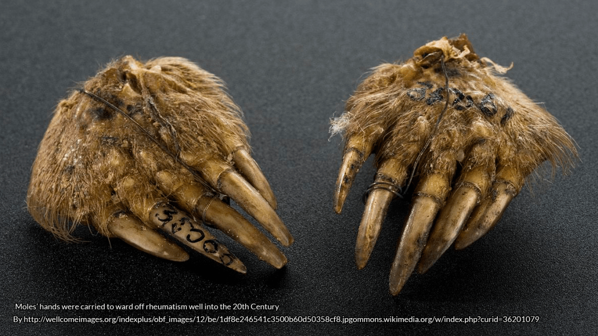 Animal Folklore: A Mole in the Hand