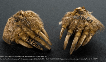 Moles' hands were carried to ward off rheumatism well into the 20th Century By http://wellcomeimages.org/indexplus/obf_images/12/be/1df8e246541c3500b60d50358cf8.jpg