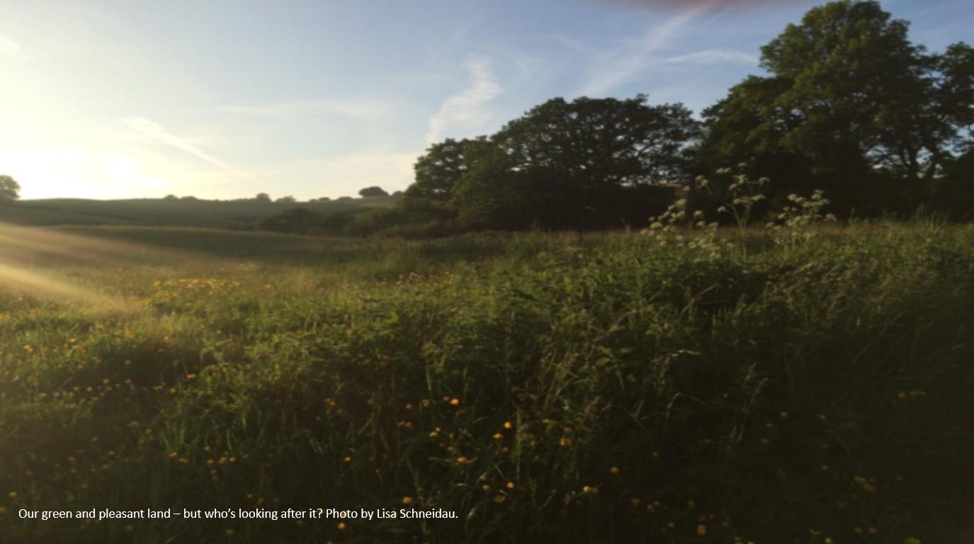 Meadow in sunshine