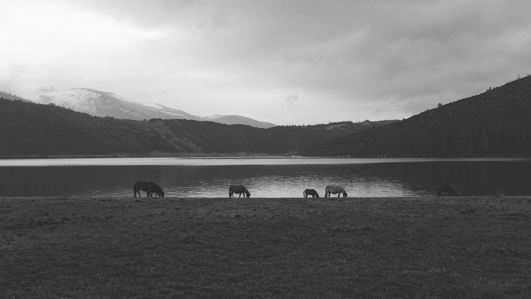 Beware of horses grazing by lochs Creative Commons CC0 https://pxhere.com/en/photo/21064