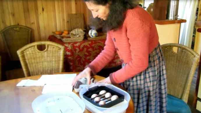 mon choix de couveuse automatique et d'œufs fécondés
