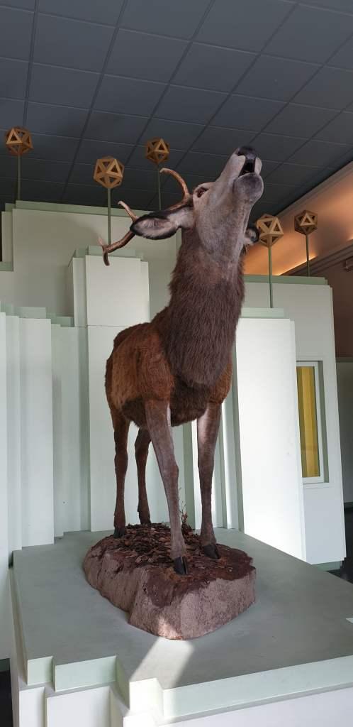 cervo-della mesola