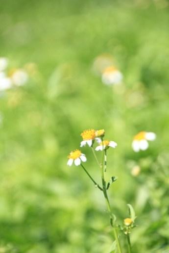 小徑遍佈小花