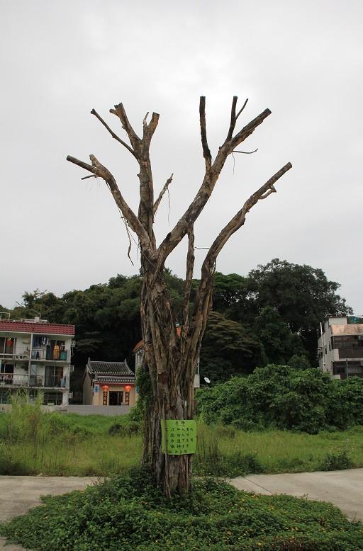 井欄樹地標