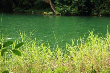 青綠的湖畔