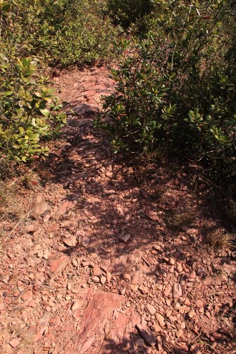 整條路就像鋪了紅地毯