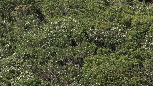 白花遍佈了整個山坡