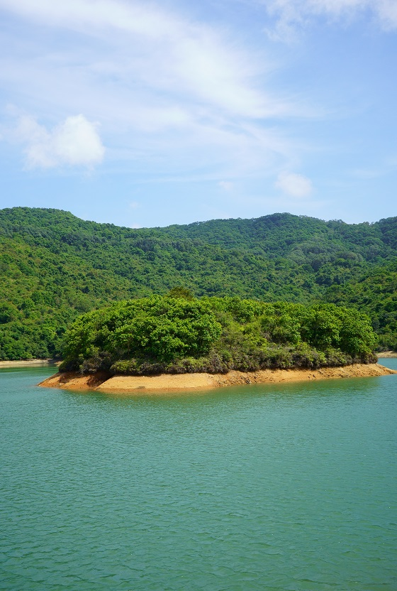 水塘中央的小島
