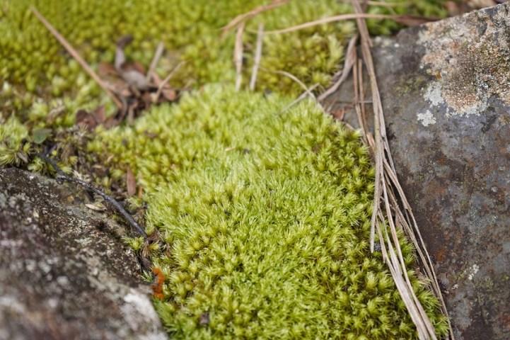佈滿了苔蘚