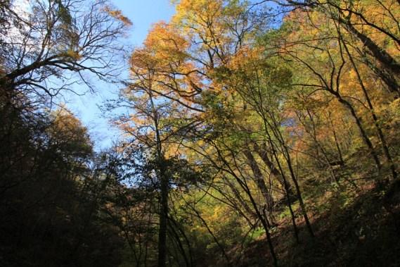 沿途兩旁的樹木已漸黃