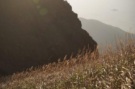 南天門山坡上的芒草
