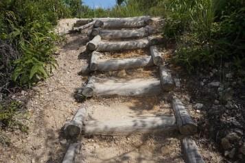 天然木材造成的步道