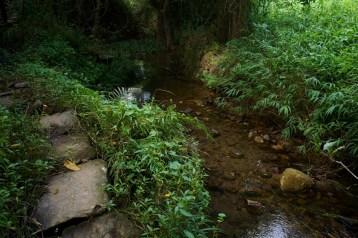 溪旁的古道