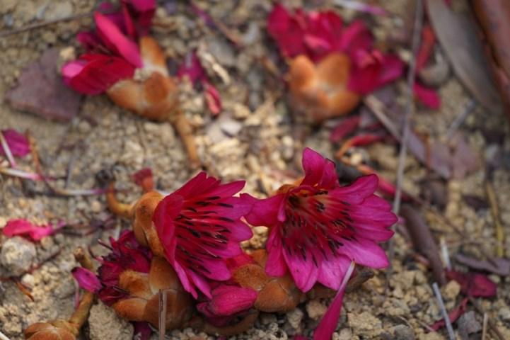 掉落的花兒