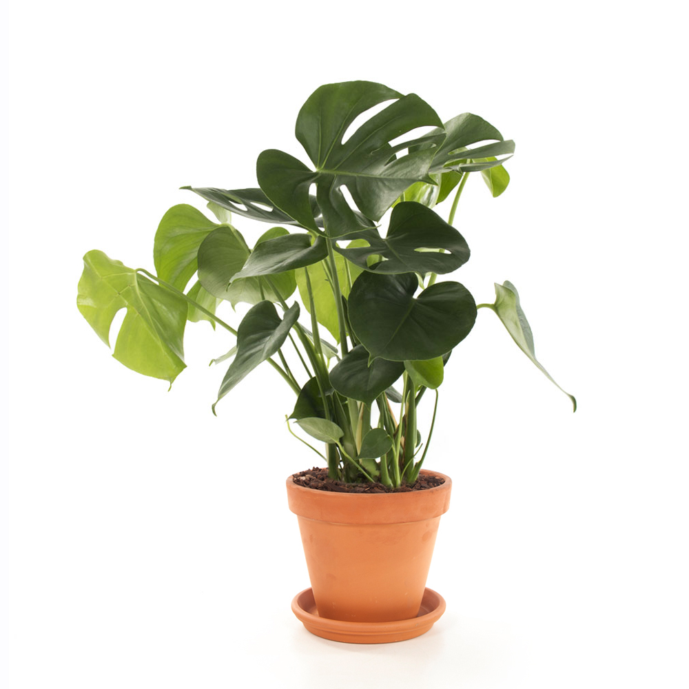 Friday favourite groene kamerplanten  Followfashion