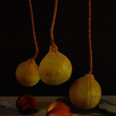 Winter's Toxic Fruit