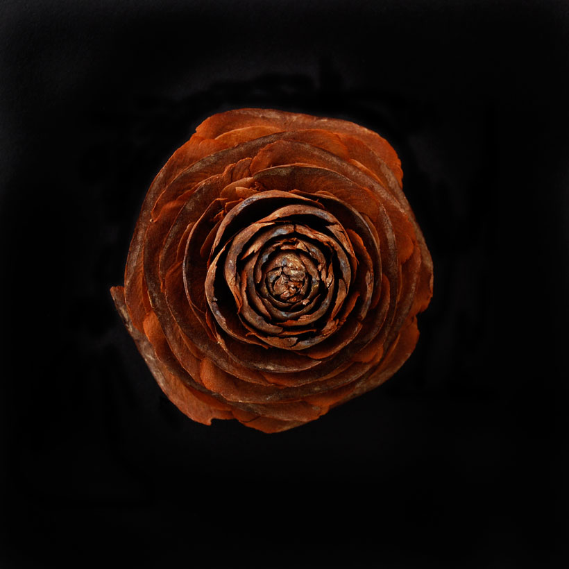 The Wooden Rose © Yvonne Cornell 2013