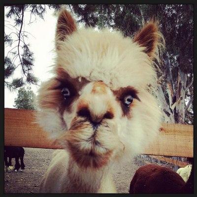 Found Fridays: Llama Mama