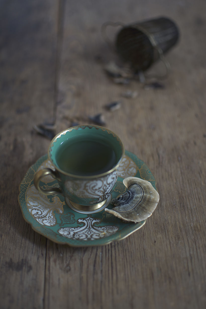 Turkey Tail Tea
