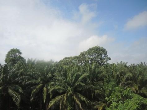 Zugfahrt durch tropischen Palmenpracht