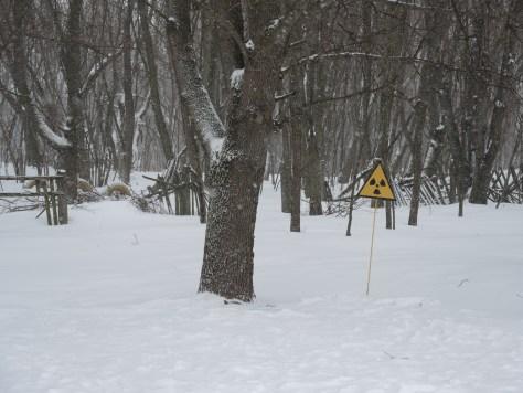 An den Bäumen herrscht erhöhte Radioaktivität im Erdreich.
