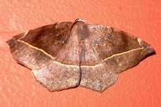 Moth 04