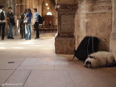 dog in saint-merri, paris
