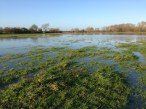 A flooded field that the path runs through - I had to backtrack and take a road until catching up with the path again