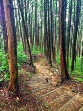 Walking to Temple 12, Shosanji