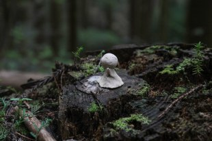 Tiny little jizo-san on a tree stump on the Choishimichi trail
