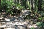 Stone path on the descent of Tsuzurato toge pass, Iseji route