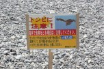 Watch out for hawk kites swooping down and stealing your food on the beach!