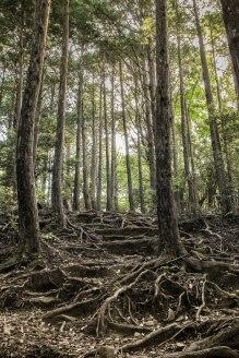 Tree-root trail!
