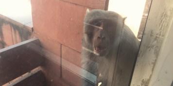 Observant monkey