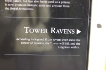 I guess the ravens didn't get the memo. *snicker*