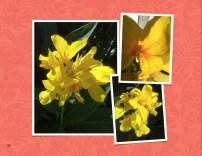 fiore giallo maculato