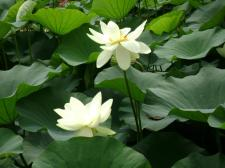 Fiori dell'Orto-botanico nelle vicinanze di Merano