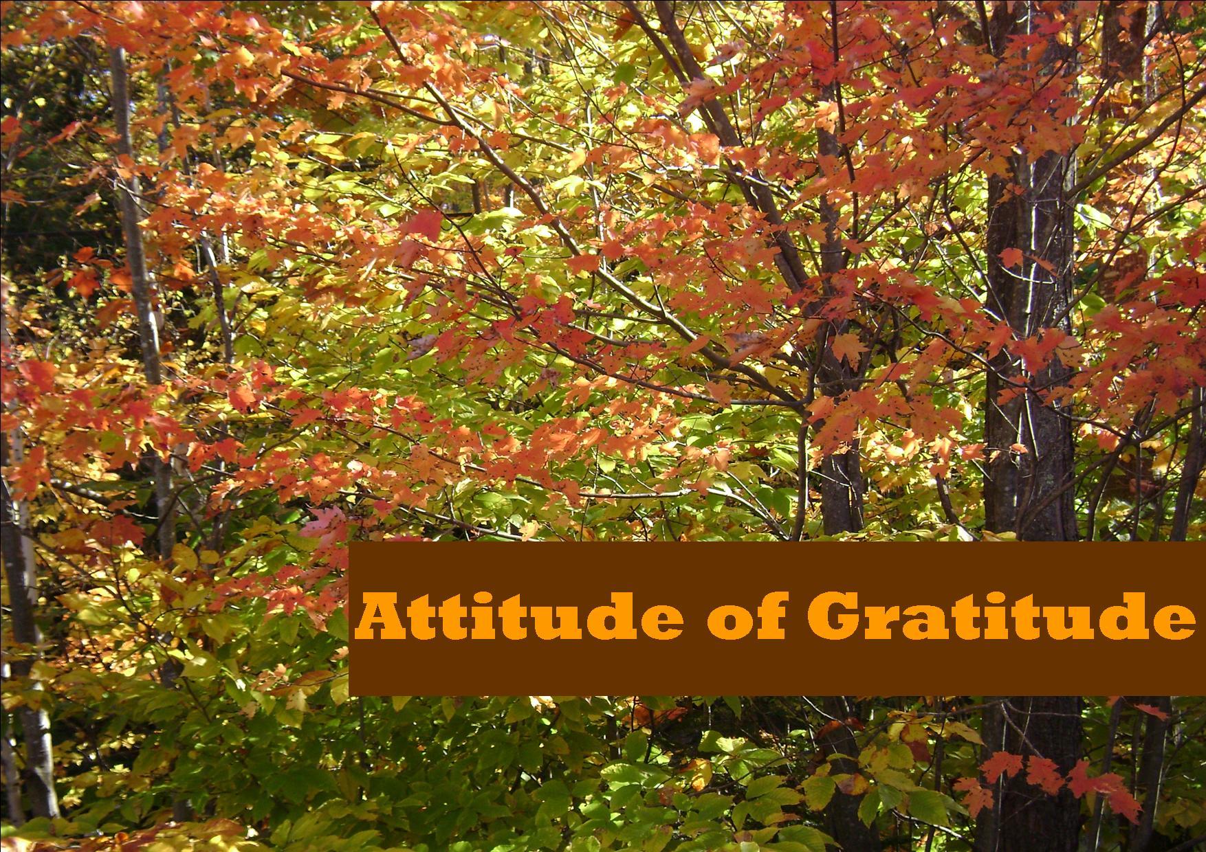 Attitude Of Gratitude Appreciating What We Have The