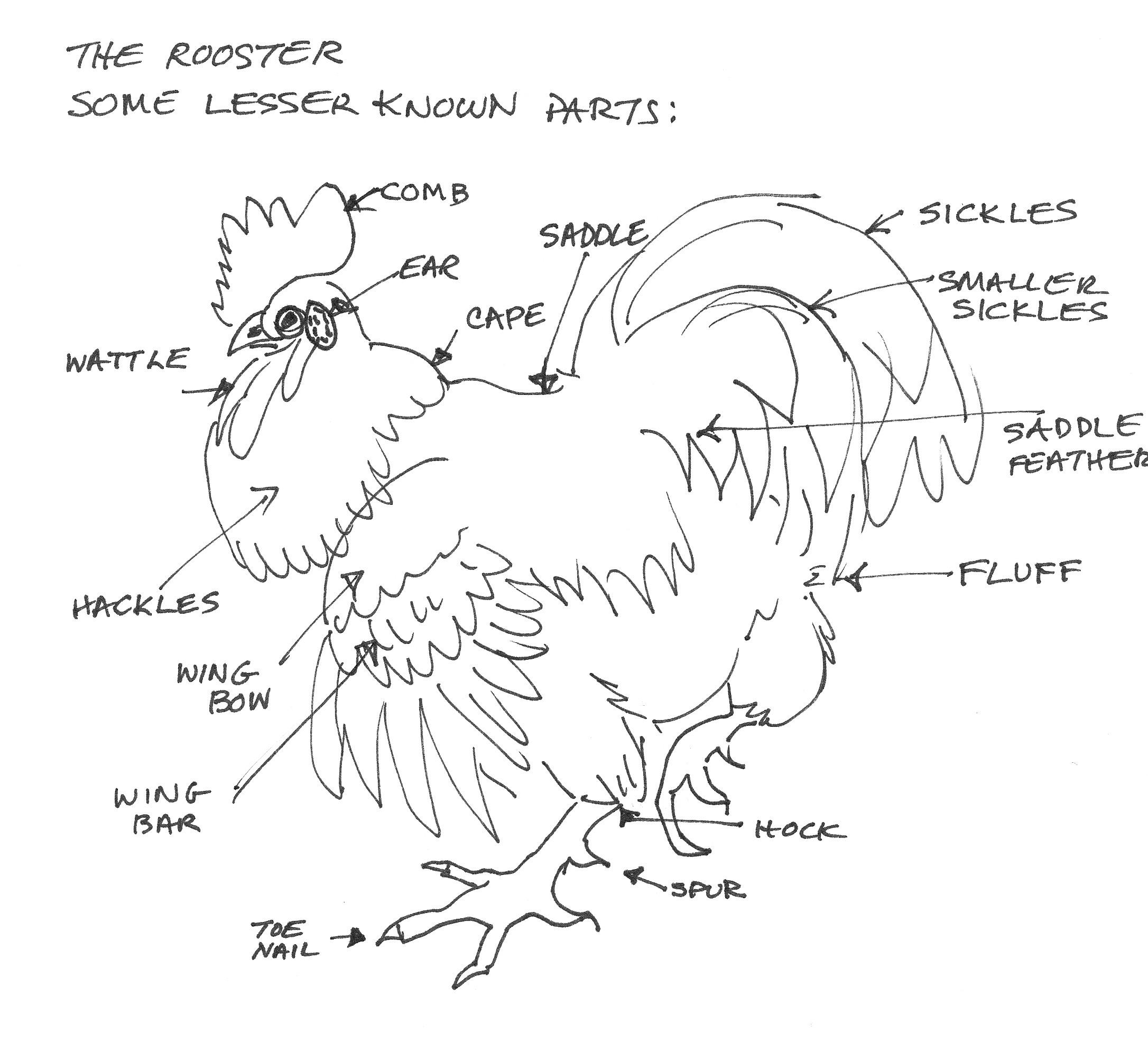 Barnyard Birds 2 Roosters