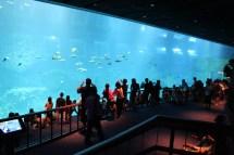 Aquarium Resorts World Sentosa Followmywanders