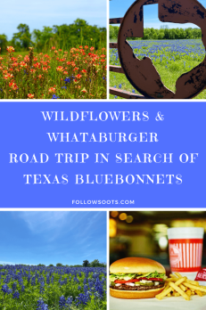 Road trip to see Bluebonnets