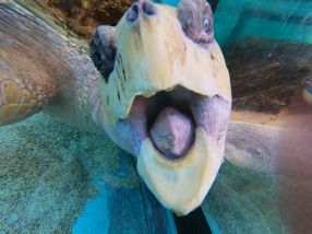 Visiting Sea Turtle Inc is another of the fun activities on South Padre