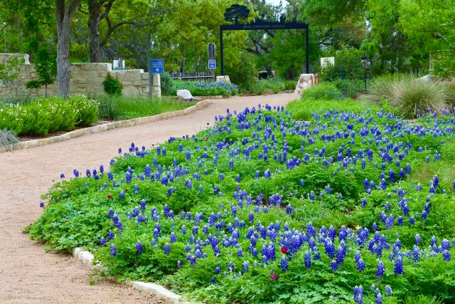 Lady Bird Johnson Wildflower Center is considered one of the best places to see bluebonnets