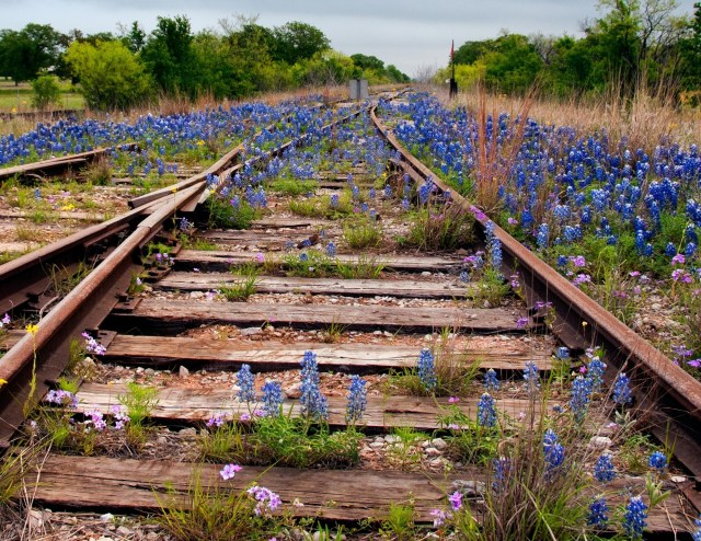 Kingsland is a great small town to see bluebonnets