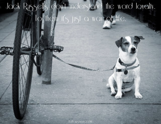 Jack Russell Quotes