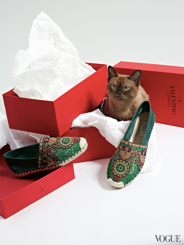 gatinhos-e-sapatos-vogue-03