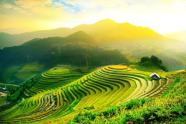 Shutterstock significado verde campo