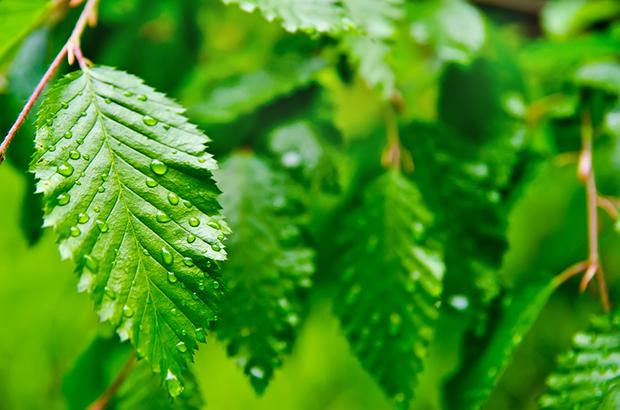 Significado cor verde folha