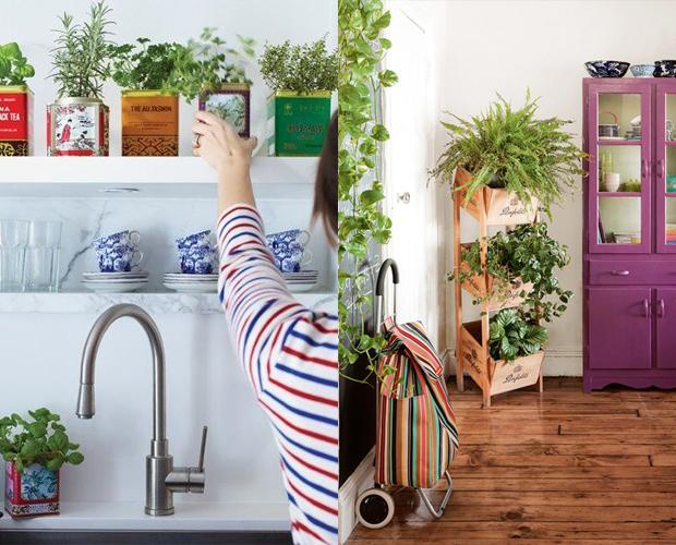 casa mais colorida plantas