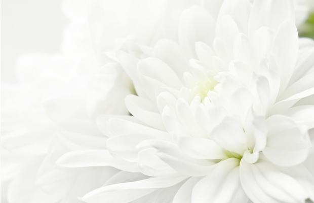 curiosidades gotas de cor branco white